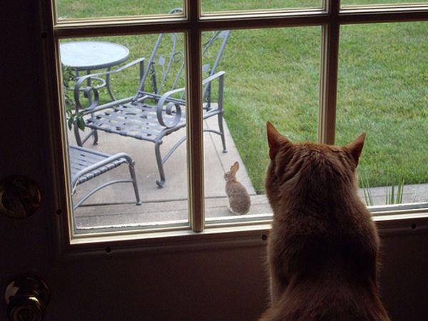 हर जगह 10 तरीके बिल्लियों वसंत के लिए तैयारी कर रहे हैं