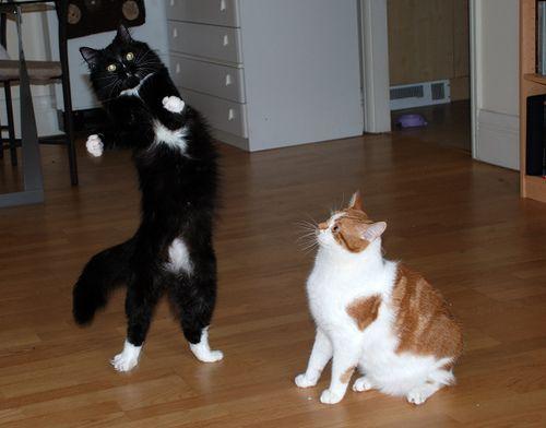 11 बिल्लियों जो नृत्य, नृत्य, नृत्य, नृत्य करने के लिए आए थे