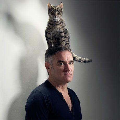 14 मानव बिल्ली पेड़