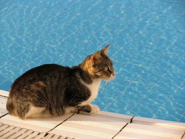 25 तरीके बिल्लियों 2013 की सामाजिक गर्मी लहर में ठंडा रख रहे हैं