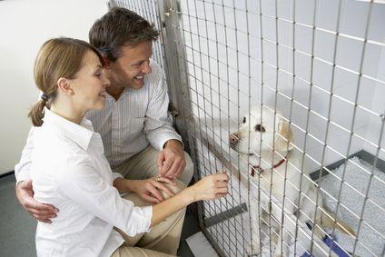 आश्रय से अपनाने से पहले कुत्ते स्वभाव परीक्षण करने के लिए 5 युक्तियाँ