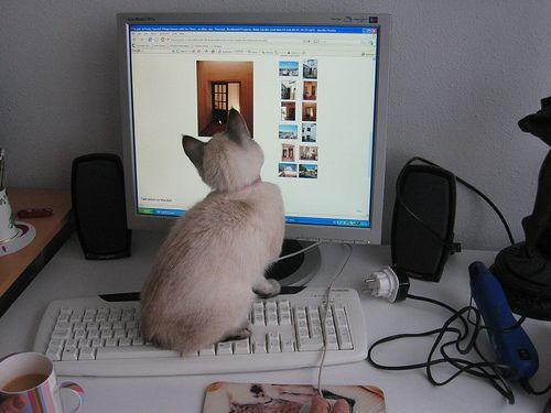बिल्ली-सुरक्षित कंप्यूटर कार्य क्षेत्र के लिए 6 कदम