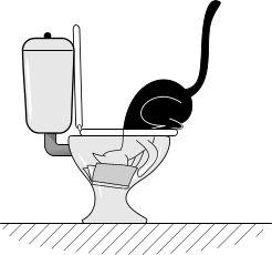 शौचालय में 8 चीजें बिल्लियों अपने सिर के साथ करते हैं