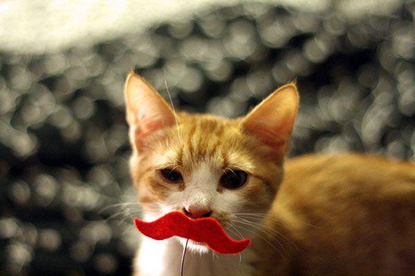आइंस्टीन से पूछें: हमारा नया साप्ताहिक कॉलम बिल्ली से सलाह प्रदान करता है