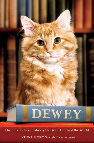 पुस्तक समीक्षा: दुनिया को छुआ जो छोटे शहर पुस्तकालय बिल्ली डेवी
