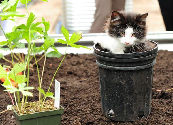 बिल्ली के खेल के मैदान अब एक चीज हैं - कम से कम टोरंटो मानव समाज में