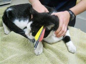 बिल्ली तीर से छीन रहा है