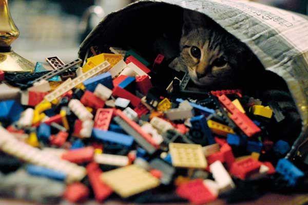 बोरिस बैग ओ में लेगो रात का आनंद लेता है