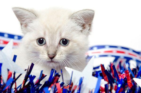 बिल्लियों और आतिशबाजी: दुःख के 5 चरणों