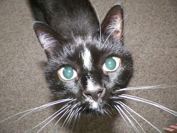 बिल्लियों चुंबन योग्य हैं - खासकर इन 6 शरीर के अंग