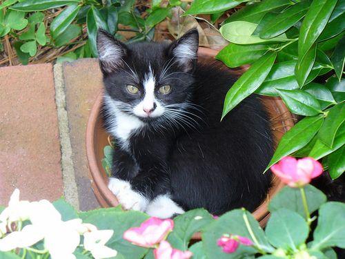 फूलों के बर्तन में बिल्लियों: तो प्यारा खिलना!