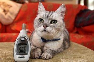 बिल्ली का गर्मीदार purr विश्व रिकॉर्ड सेट कर सकते हैं
