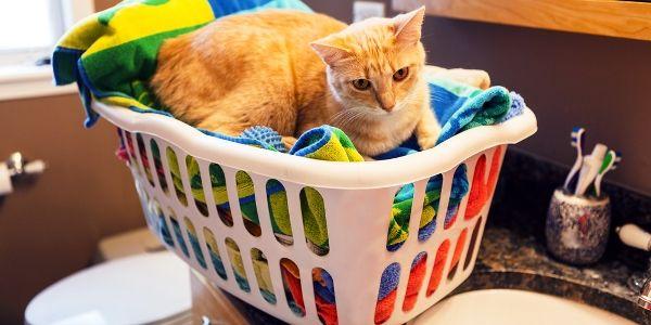मेरे बिल्लियों और खुद को हरित लाभ के 4 तरीके जीते हैं