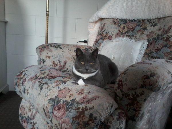नई zealand महिला मरने से उसकी 7 बिल्लियों के लिए घर तलाशता है