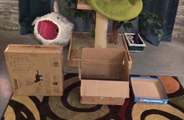 तीन बक्से मेरी बिल्लियों का इंतजार कर रहे हैं