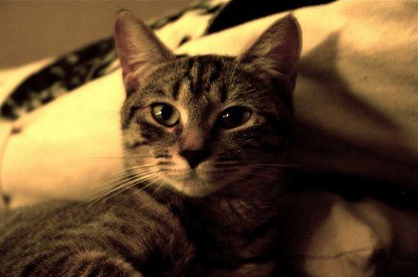 पशु नियंत्रण अधिकारियों द्वारा डंप किए जाने के बाद पारिवारिक बिल्ली गायब है