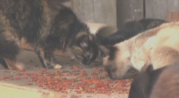 मिसिसिपी एजी संग्रहालय से फारल बिल्लियों गायब हो गए