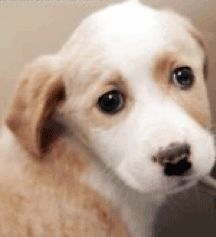 Freekibble.com आज joplin टर्ननाडो पशु पीड़ितों के लिए 100% किबल का दान