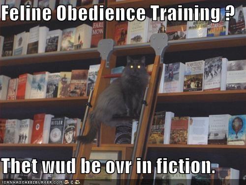अंदाज़ा लगाओ? बिल्लियों के लिए यह हमेशा स्वतंत्रता दिवस है