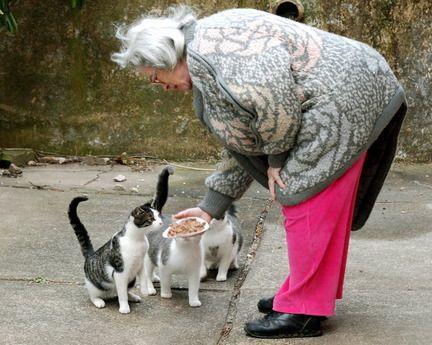 फारल बिल्लियों को तूफान ईआरएल द्वारा कड़ी मेहनत करने में मदद करें