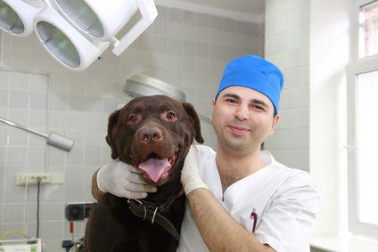 पशु चिकित्सक के साथ कुत्ता
