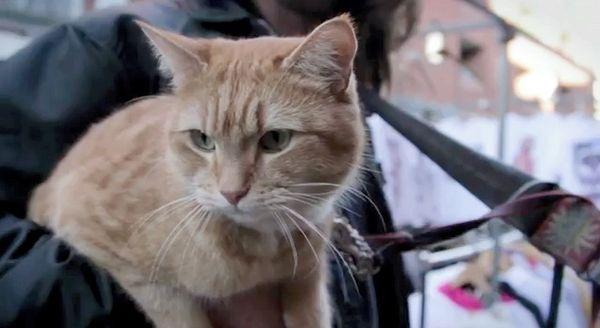 बेघर लंदन बिल्ली का ज्ञापन अब प्रिंट में है