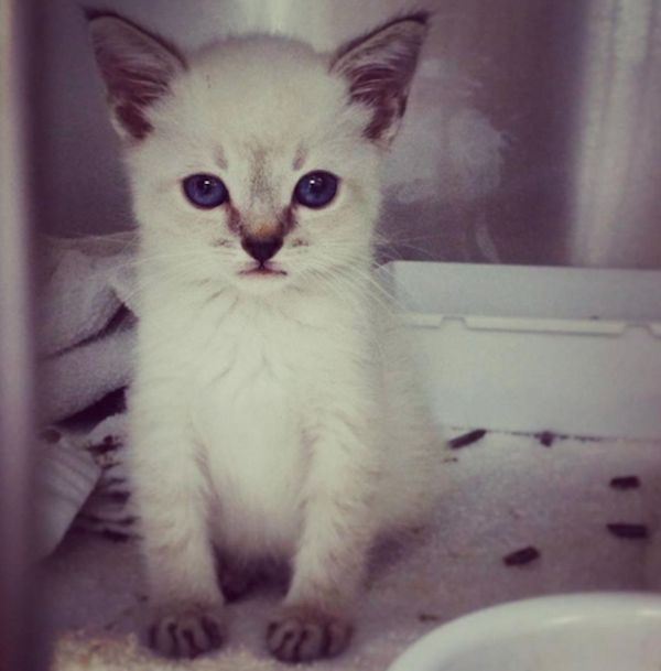 किटी ने कितने कैसीडी को अपने मालिकों को विशेष जरूरतों की बिल्लियों को बचाने के लिए प्रेरित किया