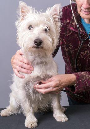 पशु चिकित्सक के साथ दुखी कुत्ते के साथ दुखी कुत्ता