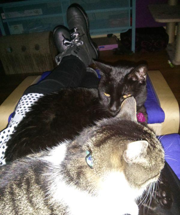 आपकी बिल्लियों को स्नेह कैसे दिखाते हैं?