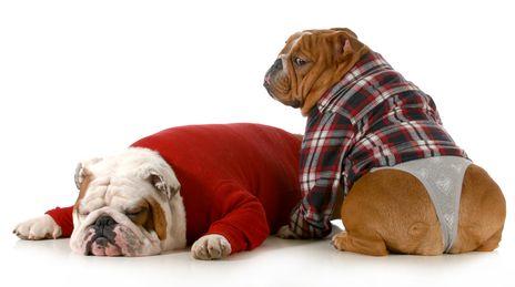 एक कुत्ता गर्मी में कितना समय रहता है?