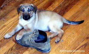 जूते के साथ पिल्ला बजाना