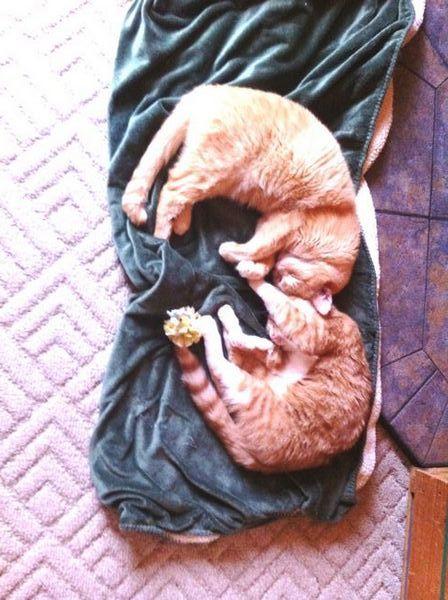 अपने महत्वाकांक्षी दोस्तों को भरोसेमंद बिल्ली प्रेमियों में कैसे बदलें