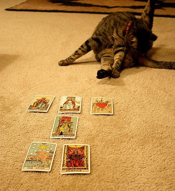 बिल्ली के बिना शर्त प्यार: क्या यह मिथक है?