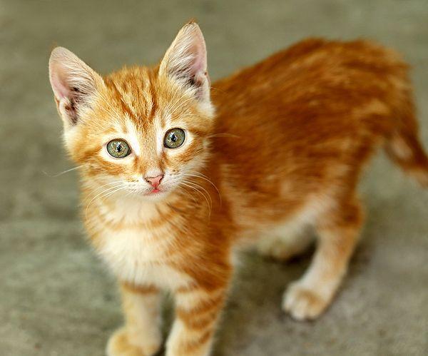 मुझे अपनी पहली बिल्ली से प्यार था, और मैंने उसे अपने परिवार के लापरवाह व्यवहार के कारण खो दिया