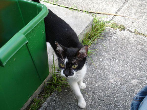 मैंने कचरे से एक बिल्ली का बच्चा बचाया, और उसने मुझे बदले में बचाया