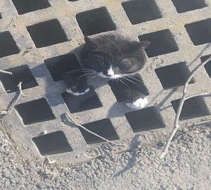 बिल्ली का बच्चा संभावित घातक खतरे से बचाया