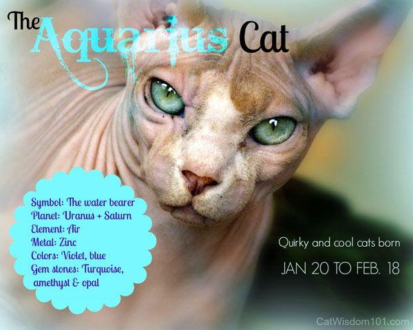 किट्टी कुंडली: फरवरी राशि राशि बिल्ली, राशि चक्र की शांत बिल्ली से संबंधित है