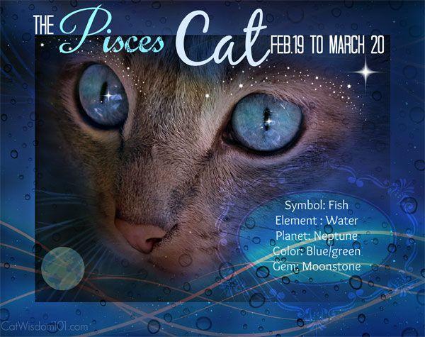 किट्टी कुंडली: मार्च मीन विरोधाभास मीन बिल्ली से संबंधित है
