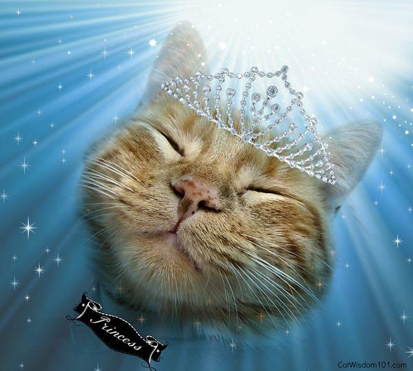 किट्टी कुंडली: अक्टूबर सुंदर लिब्रा बिल्ली से संबंधित है