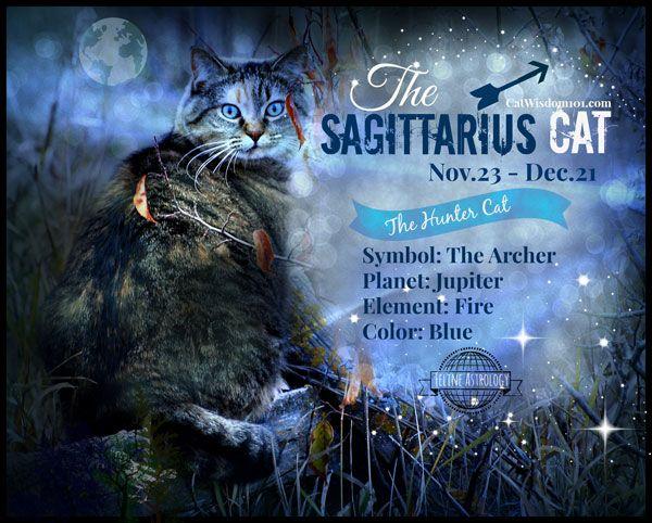 किट्टी कुंडली: दिसम्बर साहसी धनुष बिल्ली से संबंधित है