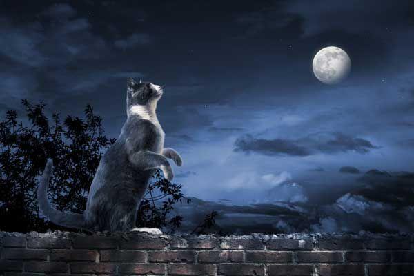 किट्टी कुंडली: नवम्बर मस्तिष्ककारी, अग्निमय वृश्चिक बिल्ली से संबंधित है