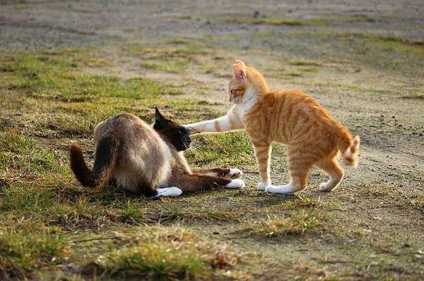 नर बनाम मादा बिल्ली - कौन सा आपके लिए सही है?