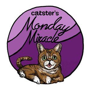 Bagel धूप का चश्मा बिल्ली लोगों को विशेष जरूरतों के बारे में सिखाता है
