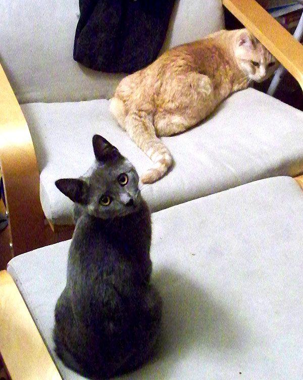 मीना बिल्ली अब आपका प्रश्न लेगी