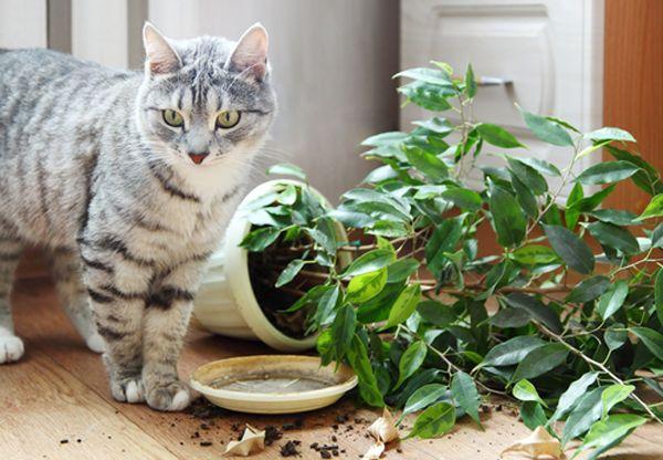 बिल्लियों से मातृ दिवस का उपहार: यह कैसे चला गया?