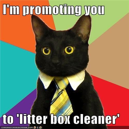 10 चीजें जिन्हें आपको बिल्ली पेशाब के बारे में जानना है