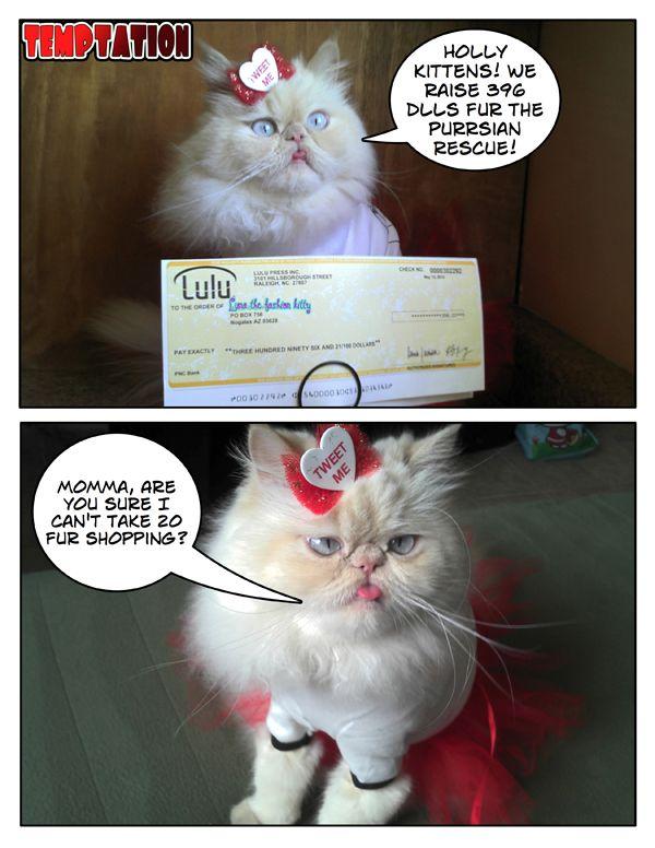 मेरी कामुकता अन्य कम furtunate kitties मदद कर रहा है!
