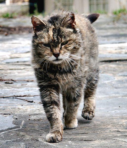राष्ट्रीय फारल बिल्ली दिवस: समाधान का हिस्सा बनें