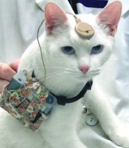 निह अब शोधकर्ताओं को यादृच्छिक स्रोत बिल्लियों को खरीदने की अनुमति नहीं देगा