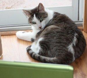 पालतू फोटो प्रतियोगिता feline mvps चाहता है